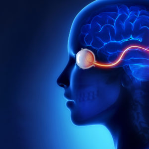 abstract image of visual system from eyes to brain